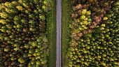 High angle view of a road trough the forest at the sunset with copy space