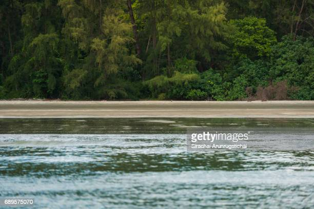 Empty sandy beach by the sea with tropical rainforest