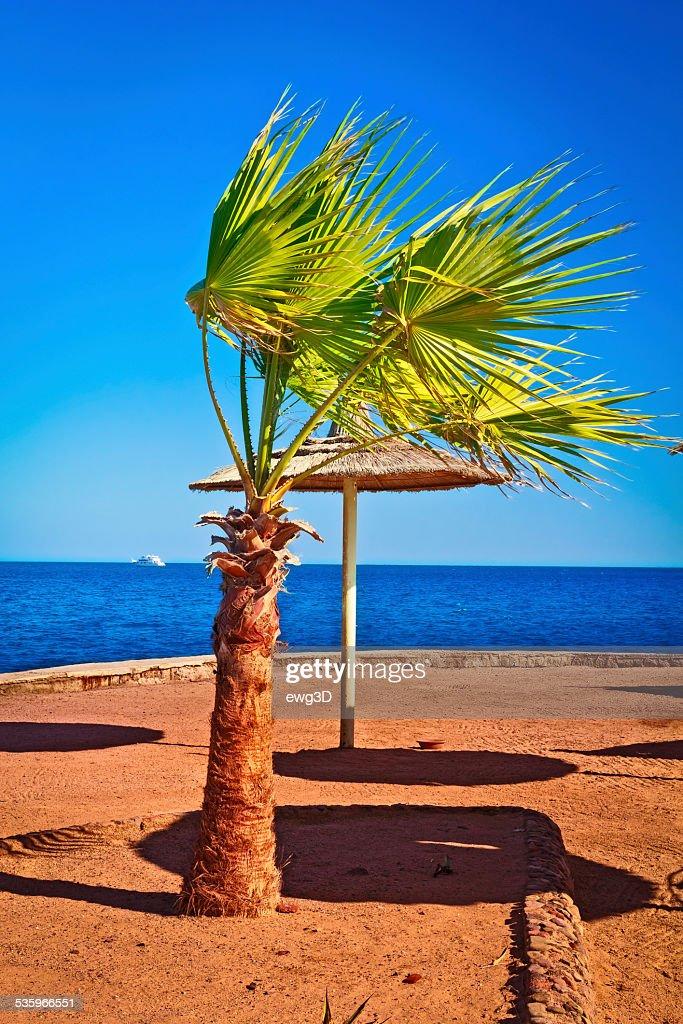 Empty Tropical Beach, Egypt : Stock Photo