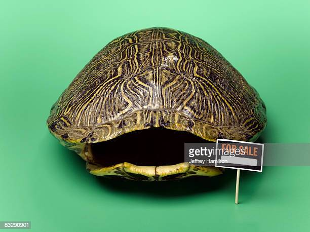 Empty turtle shell with for sale sign