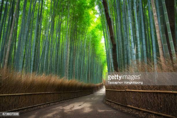 empty walking path in bamboo grove forest in Arashiyama Kyoto, Japan