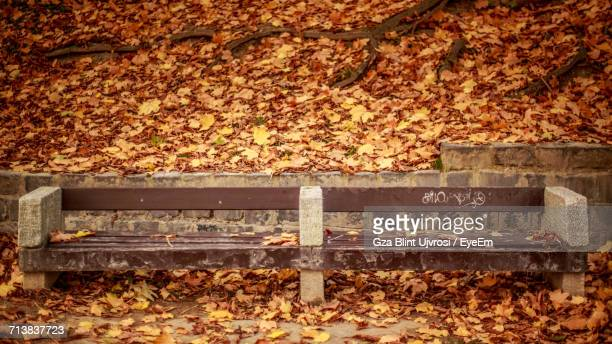 Empty Wooden Bench In Park During Autumn