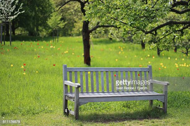 Empty wooden bench in park