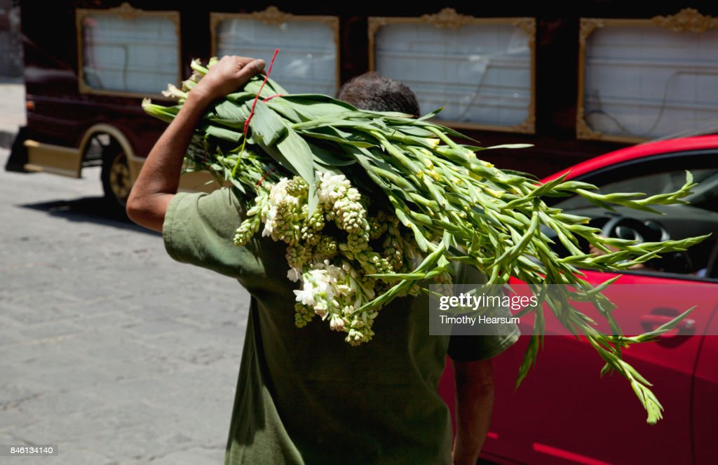 En route to market, a man carries bunches of cut gladiola and stock : Stock Photo