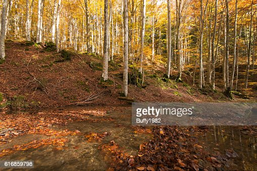 Enchanted forest : Stock Photo