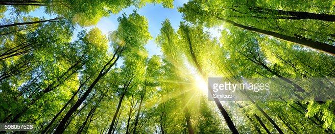 Enchanting sunshine on green treetops : Stock Photo