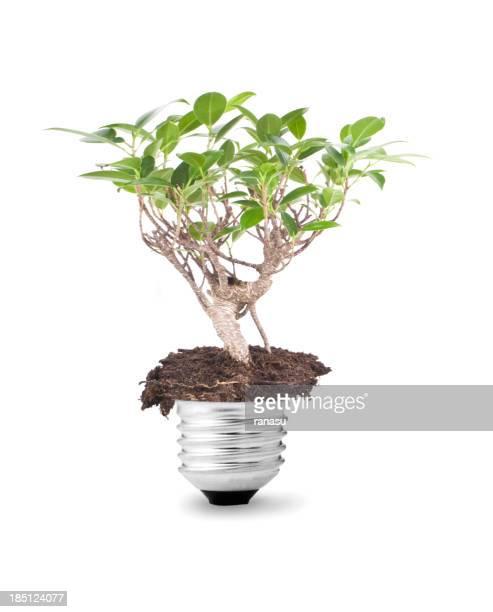 energy in the bulb
