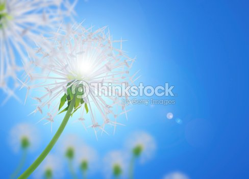 Energy Saving : Stock Photo