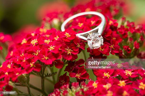 Engagment ring on red Yarrow