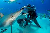 Engineered shark encounter.