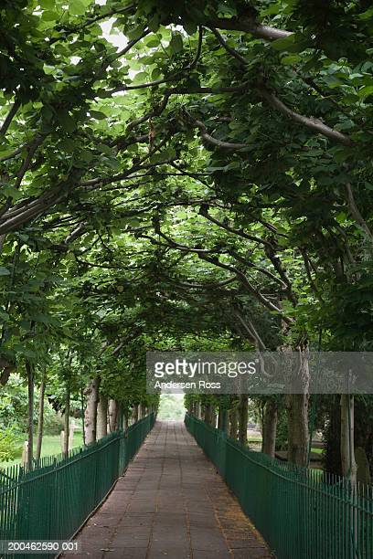 England, Bristol, Clifton, Birdcage Walk, footpath surrounded by trees