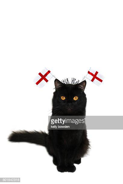 England cat with St Georges flags