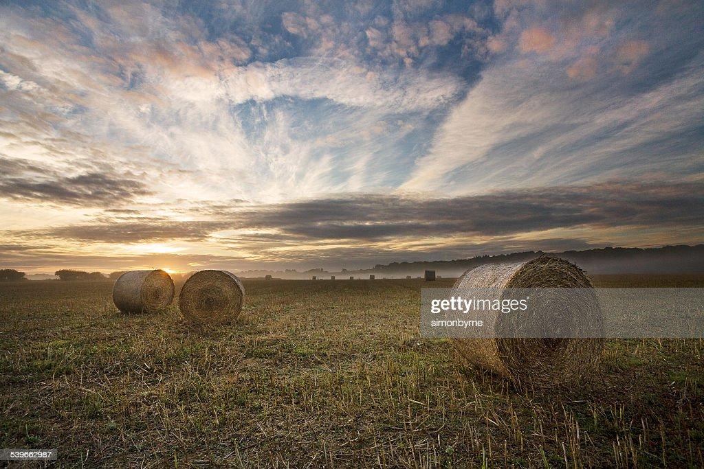 UK, England, Dorset, Sunrise in a field on Cranborne Chase,
