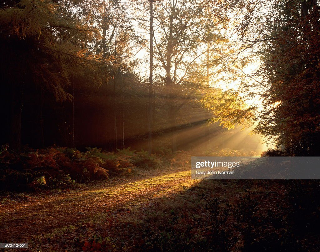 England, Hampshire, New Forest, sunlight falling on woodland path : Stock Photo