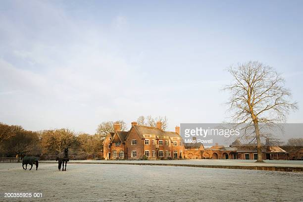 England, New Forest, Beaulieu, Lady Cross Lodge and horses