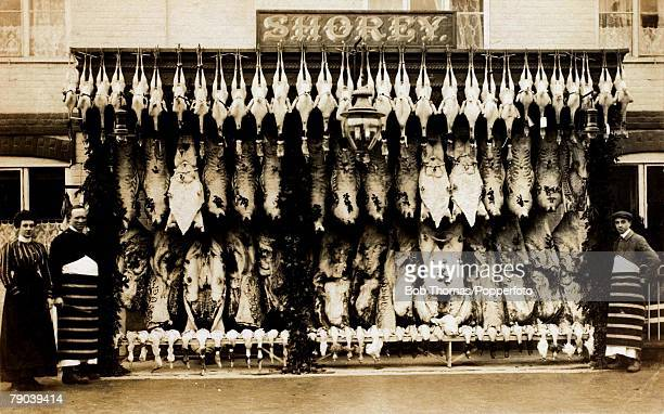 England Social History A butchers shop with a large display of meat and poultry circa 1910
