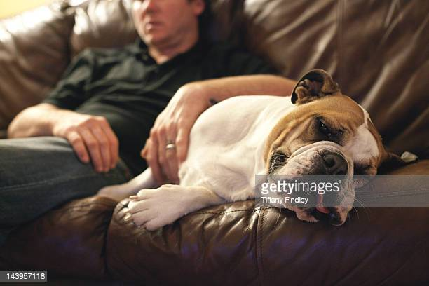 English Bulldog on couch