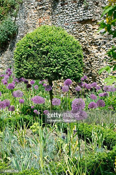English Garden with Purple Flowers