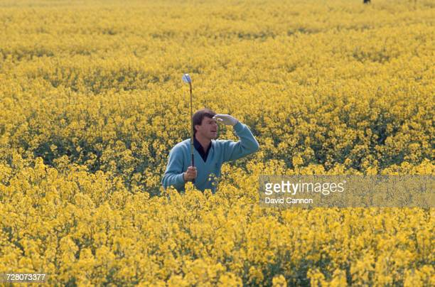 English golfer Nick Faldo searches for a lost ball in a field of yellow flowers 1990