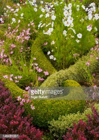 English knot garden stock photo getty images for English knot garden designs