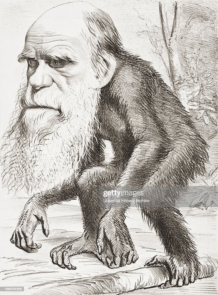 English Naturalist Here Portrayed As An Ape In A Cartoon In The Hornet Magazine Of 22 March 1871 The Caption Read A Venerable OrangOutang A...
