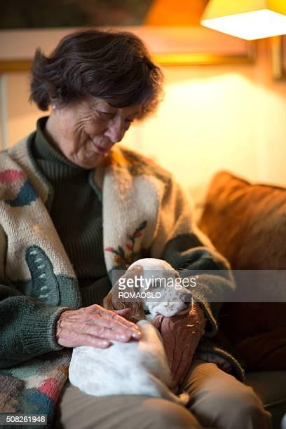 Setter inglese come una terapia cane su una donna anziana di cavallo
