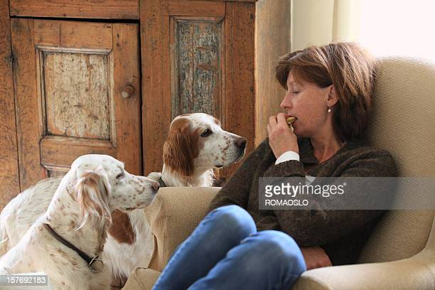 English Setters begging for waffels