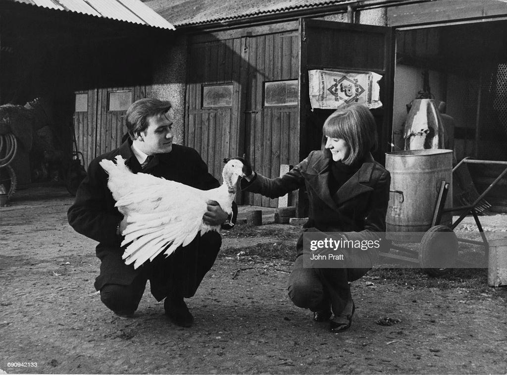 English singers Cilla Black (1943 - 2015) and Billy J. Kramer choose a Christmas turkey at a turkey farm in Kent, December 1964.