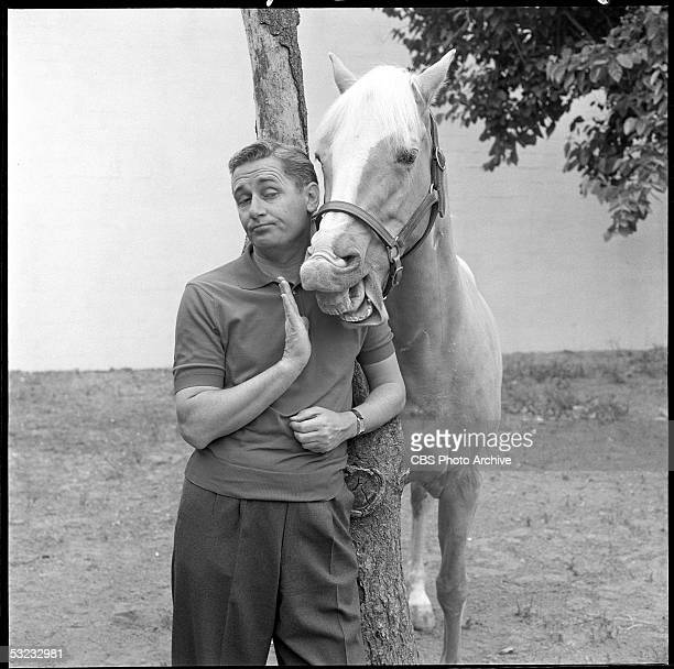 Englishborn Canadian actor Alan Young and American horse Bamboo Harvester pose by a tree for a publicity photo for the CBS sitcom 'Mister Ed' June 6...