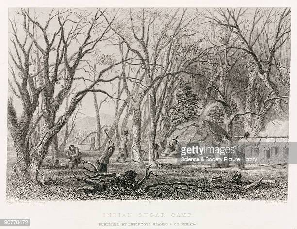 Engraving by John McRae after Captain Seth Eastman US Army of Native Americans tapping maple trees and making syrup The population of the Americas...