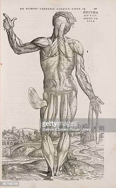 Engraving from Andreas Vesalius's greatest work 'De Humani Corporis Fabrica' which with its detailed descriptions and magnificent illustrations set a...