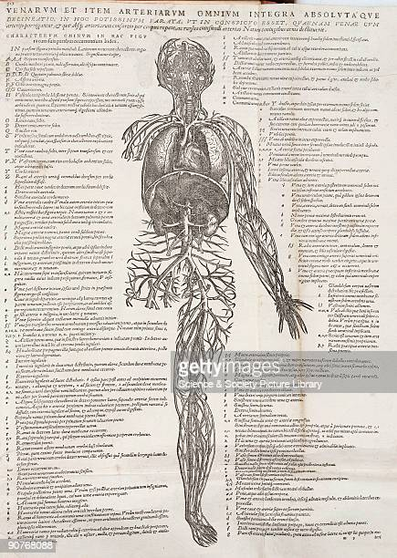Engraving of male figure used to teach students from Andreas Vesalius's greatest work 'De Humani Corporis Fabrica' which with its detailed...