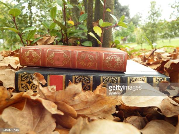 Enjoy reading in the countryside