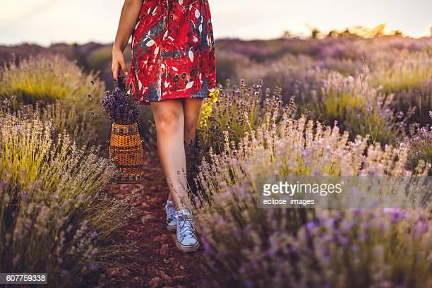 Enjoying sunset in lavender field