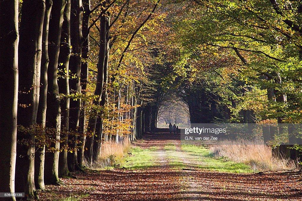 Enjoying the autumn colours