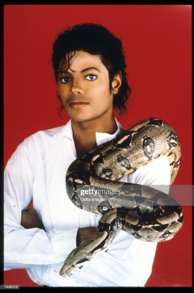 Entertainer <a gi-track='captionPersonalityLinkClicked' href=/galleries/search?phrase=Michael+Jackson&family=editorial&specificpeople=70011 ng-click='$event.stopPropagation()'>Michael Jackson</a> poses with his pet boa constrictor September 15, 1987 in the USA. Jackson, who was the lead singer for the Jackson Five by age eight, reached the peak of his solo career with 1982''s 'Thriller,' the best-selling album of all time and recipient of eight Grammy awards.