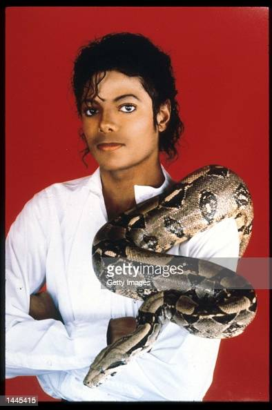 Entertainer Michael Jackson poses with his pet boa constrictor September 15 1987 in the USA Jackson who was the lead singer for the Jackson Five by...