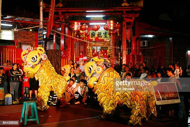 Entertainers perform a lion dance during the Chinese New Year or Imlek celebration in the ChineseIndonesian community January 24 2009 in Semarang...