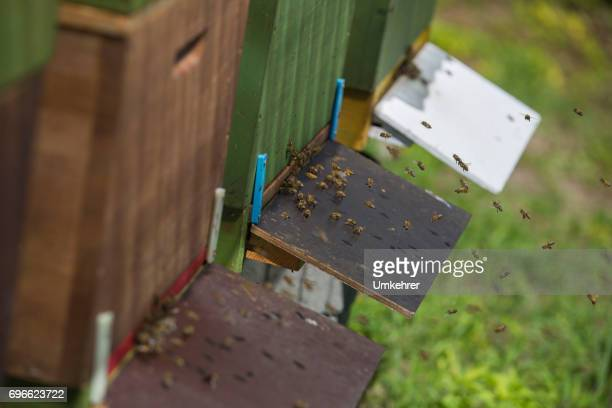 Entrance hole at a beehive