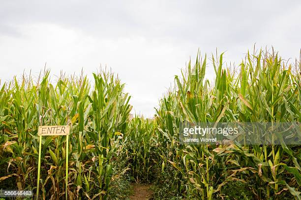 Entrance to Corn Maze