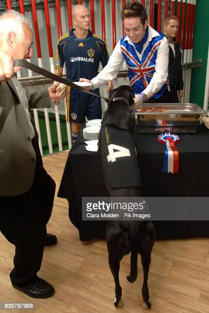 Entrepreneur and racing enthusiast Bob Morton tries to stop his dog Westmead Hawk the 'wonderdog' of greyhound racing eating the bacon sandwiches...