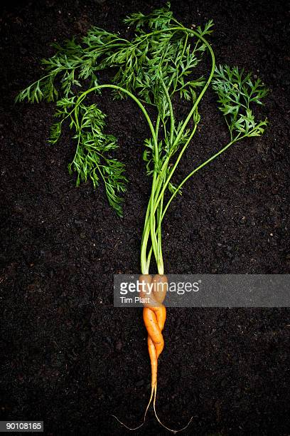 Entwined carrots