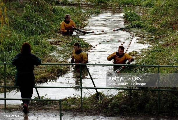 Environment Agency workers trawl Thrapston Dyke near Kettering Northants to move distressed fish into the River Nene The dyke is teaming with...