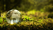Close up of glass globe in the forest with copy space