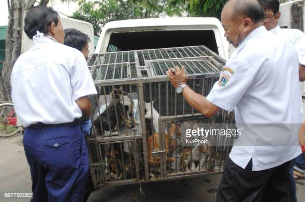 Environmental Health Office Jakarta arrests cats roaming the neighborhood residents in Jakarta on April 2017 They made arrests Wild Animal rabies to...