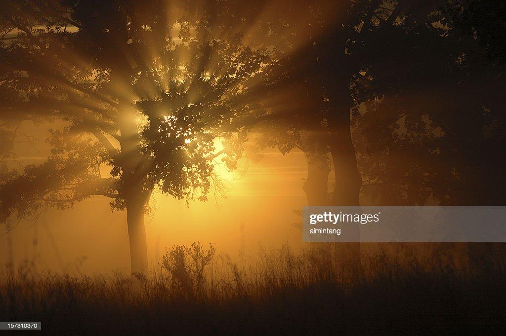 Epiphanous Rays : Stock Photo