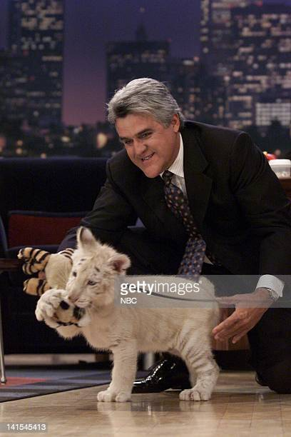 Host Jay Leno and a baby tiger on November 8 1999 Photo by NBC/NBCU Photo Bank