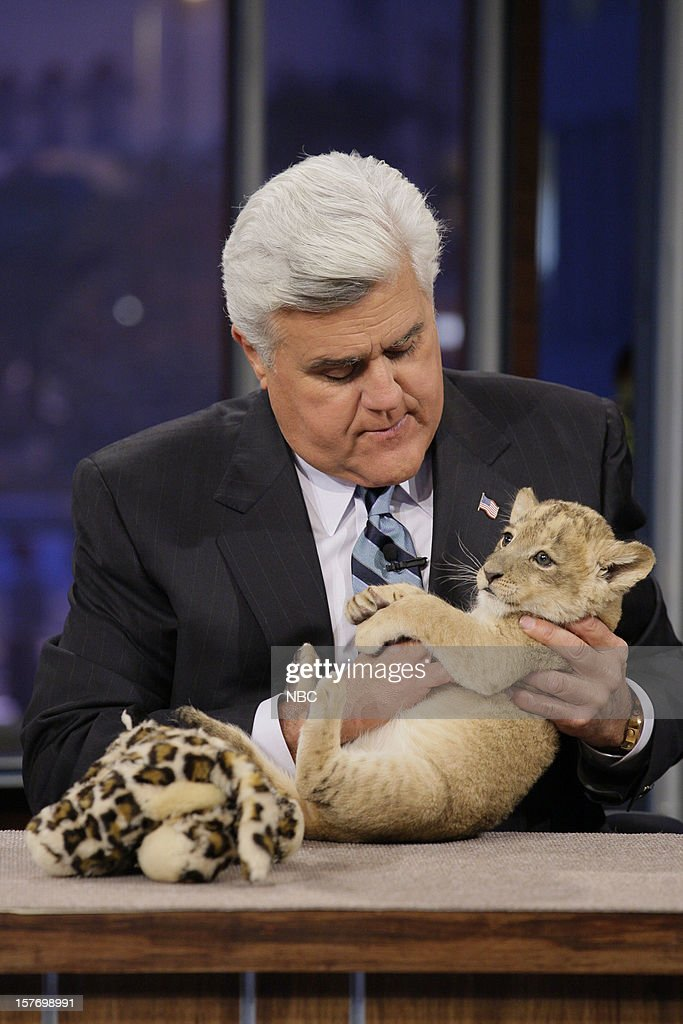Host Jay Leno plays with a baby lion on December 5, 2012 --
