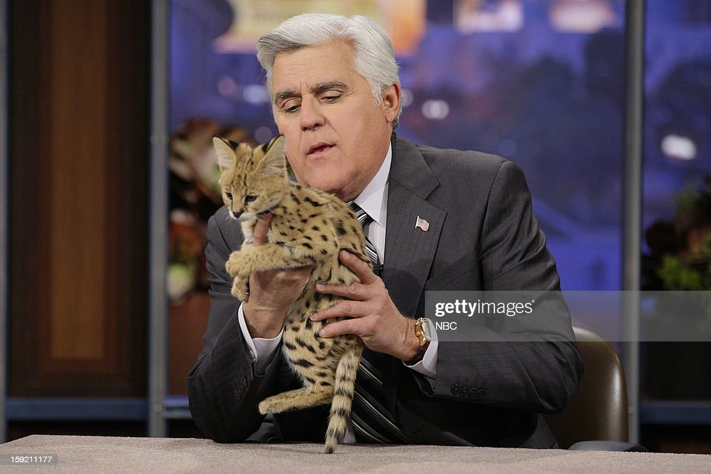 Host Jay Leno with a baby tiger on January 9, 2013 --