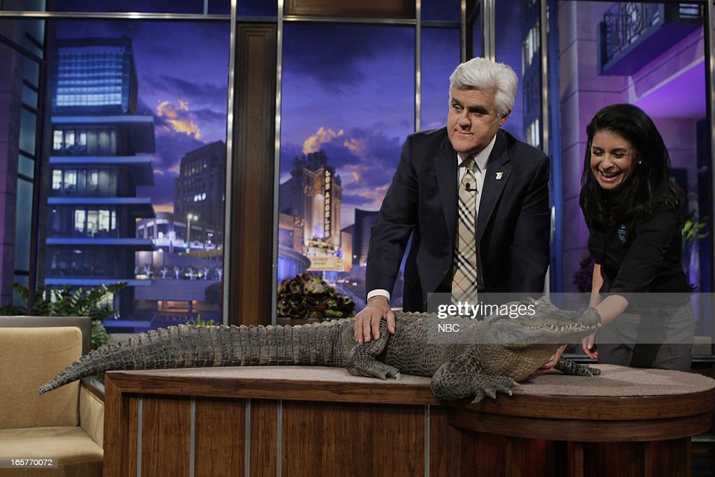 Host Jay Leno and animal expert Julie Scardina with an alligator on April 5, 2013 --